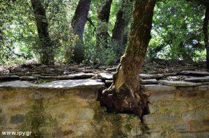 Η-Αγία-Θεοδώρα-με-τα-17-δέντρα-στην-σκεπή-της