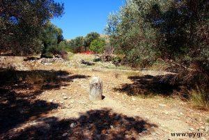 αρχαία κολώνα σε λιόφυτο Γόρτυνας