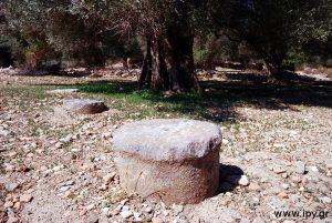 Αρχαίες κολώνες αρχαίες ελιές