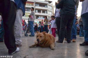 Ο Αποστόλης ο γραφικός σκύλος του Ηρακλείου