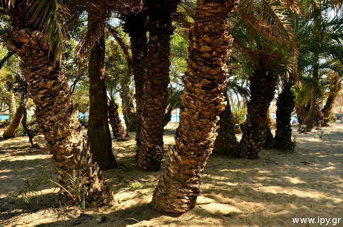 φοινικόδασος-παραλία-Βάι