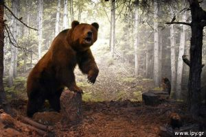 Αρκούδα Ursus arctos